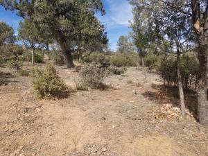 808 N Grapevine Drive, Payson, AZ 85541
