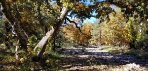 470 E Forest Service Rd 512, Young, AZ 85554