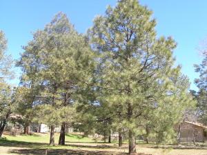 8584 W Elk Road, Strawberry, AZ 85544