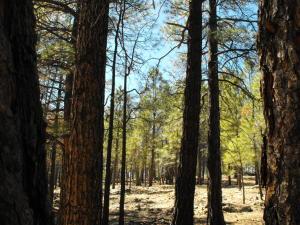 2071 Pine Canyon Drive, Happy Jack, AZ 86024