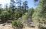 5161 N Naco Drive, Pine, AZ 85544