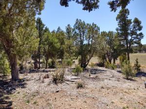 TBD Meadow, Show Low, AZ 85901