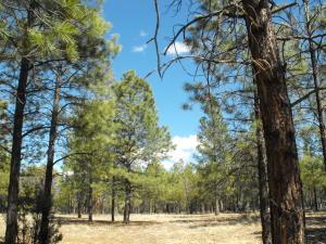 1519 Pine Canyon Drive, Happy Jack, AZ 86024