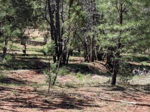 Parcel 63 Leisure Road, Christopher Creek, AZ 85541