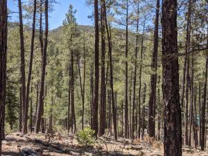 28 Wipila Wiki Drive, Christopher Creek, AZ 85541