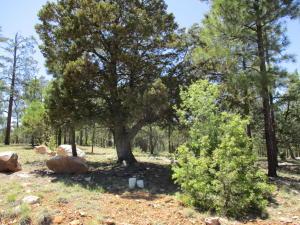 2408 San Juan Drive, Happy Jack, AZ 86024
