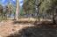Lot 130 Hunter Creek Drive, Payson, AZ 85541