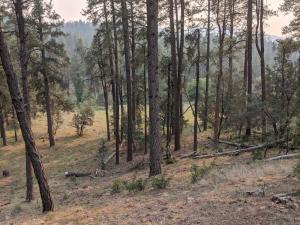 134 Hunter Creek Drive, Christopher Creek, AZ 85541