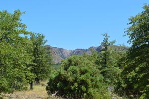 Lot 31 E Coues Deer Lane, Payson, AZ 85541