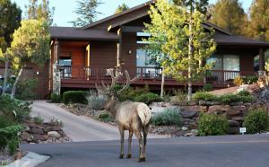 1005 S Montana Drive, Payson, AZ 85541