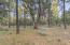 Surrounding forest of Ponderosa pine, oak & juniper