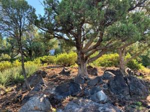 1105 S Sequoia Circle, Payson, AZ 85541