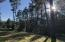 Tall Ponderosa Pines on property