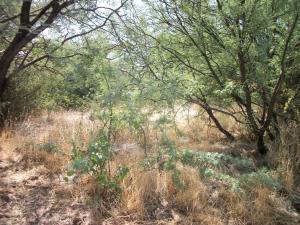 497 Buckboard Trail, Gisela, AZ 85541