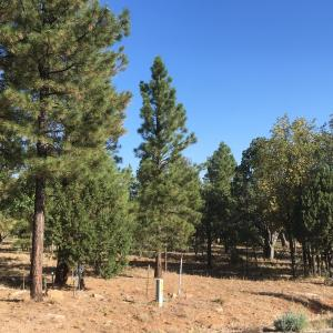 5658 Bald Eagle Way, Happy Jack, AZ 86024