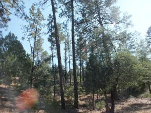2420 E Scarlet Bugler Circle, Payson, AZ 85541