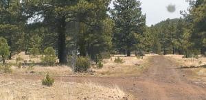0000 Dripping Vat Spring Fire Road, Vernon, AZ 85940