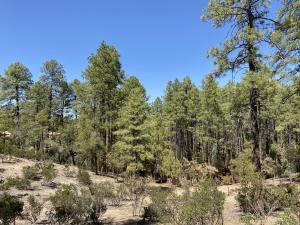 3103 E Monument Peak, Payson, AZ 85541