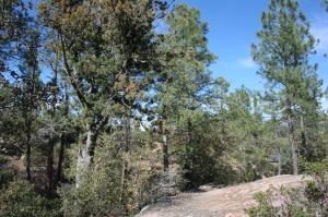3004 E Game Trail, Payson, AZ 85541