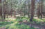 589 Trout Springs Road, Forest Lakes, AZ 85931