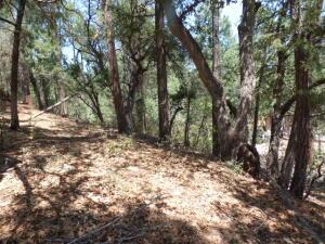 3944 N ORLOFF Road, Pine, AZ 85544