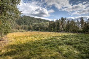 Grasses and Pasture View