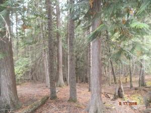 Middle Fork Santa Creek Road, St. Maries, ID 83861