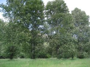 Property 2 acres