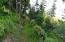 Trail through lower 10 acres.