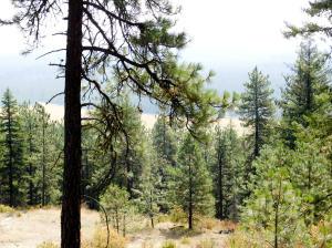 NNA Bear Ridge 10 Acres