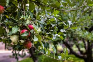 Apple and fruit trees