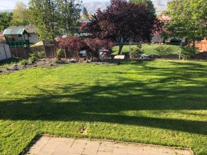 Back Yard 2-1024x768