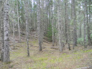 NKA 122 Acres Avery, Avery, ID 83802