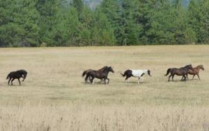 NKA Moose Mountain Road, Tensed, ID 83870