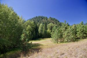 Scattered Trees and Pasture
