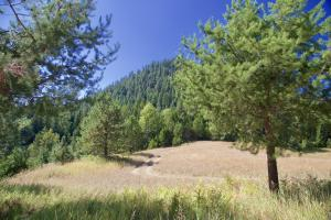 Trees and Pasture