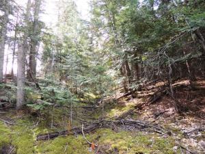 NKA S Junco Trail, Lt 18-22, Harrison, ID 83833