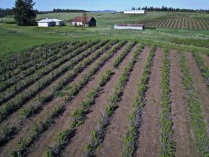 Farm & Crops