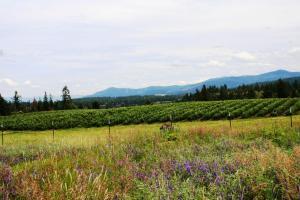 Raspberry Crops