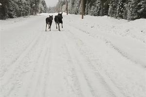 North Idaho Traffic