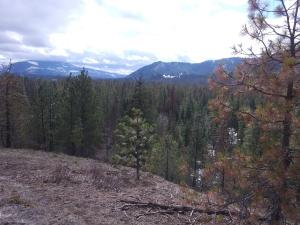 NNA Peterson Rd (Lot 2), Priest River, ID 83856