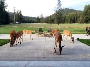 Deer on Patio