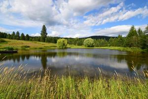 Private Pond[35551]