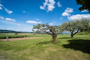 orchard/garden