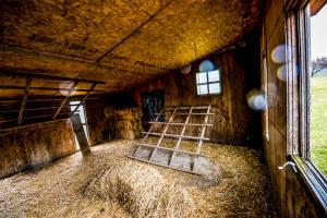 interior of chicken coop
