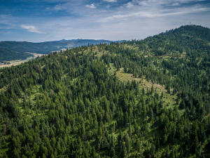 --56-115 acres of timber