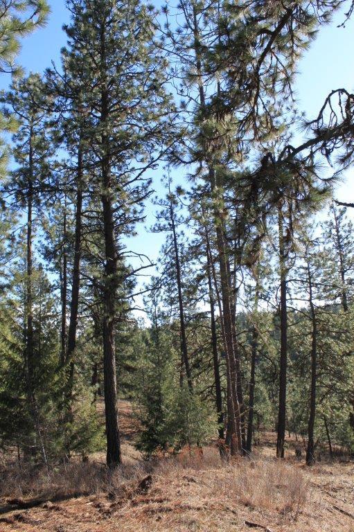 photo of Ditmore Rd Worley Idaho 83876
