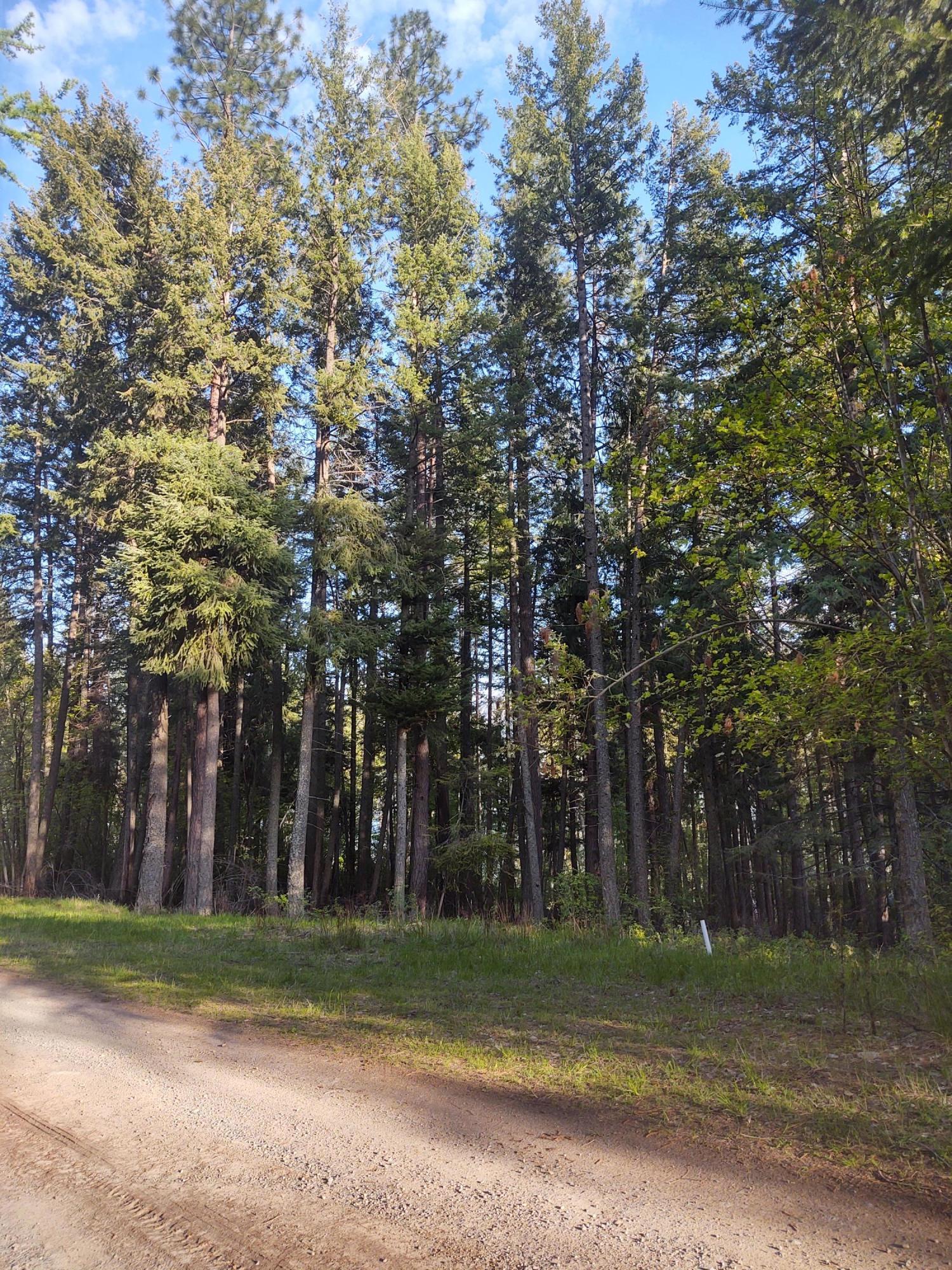 photo of N Terrace Dr Bayview Idaho 83803