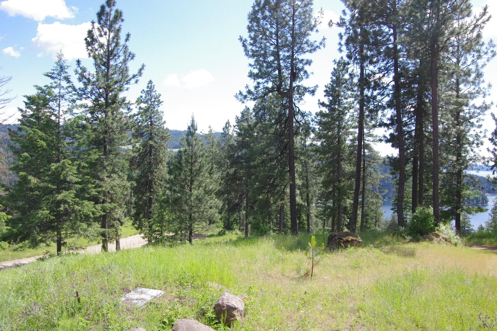 photo of   Hanson Rd Harrison Idaho 83833