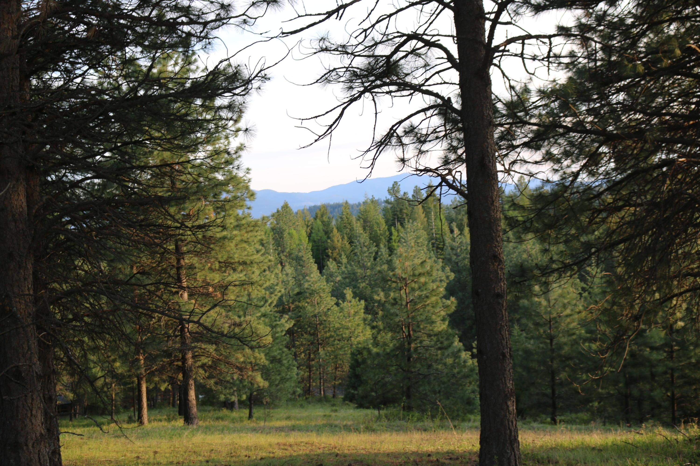 photo of   NNA Saddle Ridge LT3 (north) Rd Rathdrum Idaho 83858
